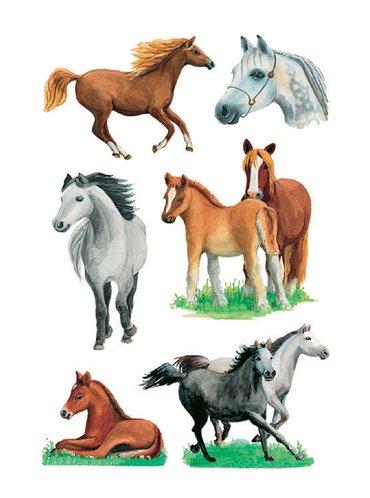Etiket Herma paarden rassen